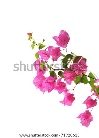 Mediterranean flowers isolated on white
