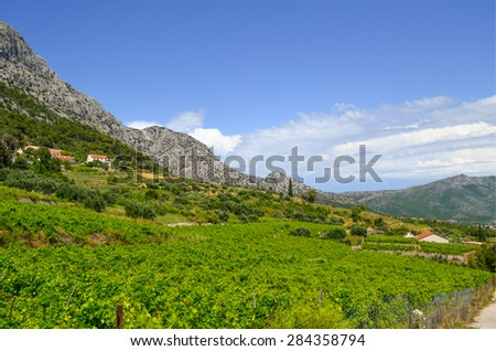 Mediterranean landscape with a country vineyard - stock photo