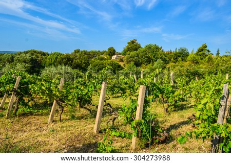 Mediterranean landscape with an old vineyard - stock photo