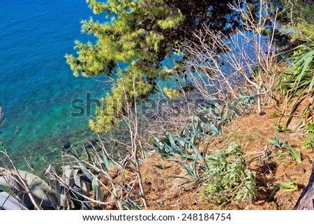 Mediterranean plants by the turquoise sea - agave and pine tree - stock photo