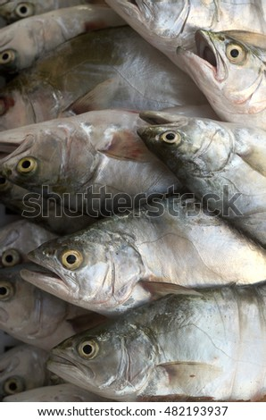 Mediterranean pompanoes fishes catched with a fishnet