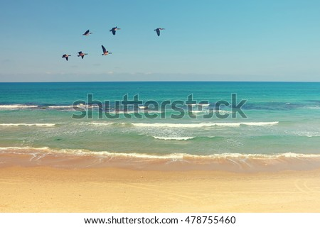 Mediterranean sea and sand beach landscape with migrating birds. Clear blue sky and calm water with soft sea surf. Autumn season. Israel. Toned colors old style photo