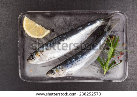 Mediterranean seafood concept. Fresh anchovy fish on ice plate with colorful peppercorns and fresh herbs on black textured background. - stock photo