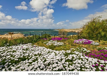 Mediterranean seaside landscape with white and pink flowers. - stock photo