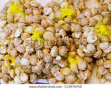 Mediterranean snails in yellow nets a a local typical food - stock photo