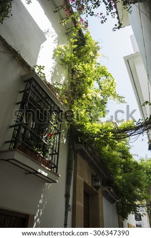Mediterranean, streets of Marbella in Spain with flowers and plants on the facade