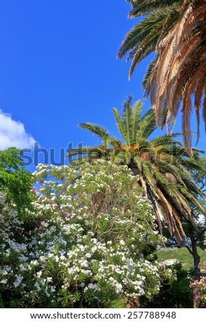 Mediterranean vegetation in sunny day - stock photo