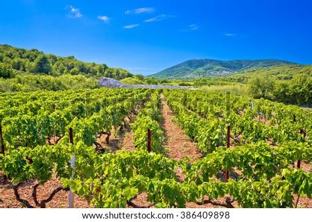 Mediterranean vineyard on Vis island, Dalmatia, Croatia - stock photo