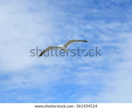 Mediterranean white seagull flying against the blue sky