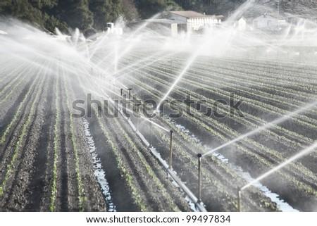 Medium shot of a farmer's field against a blue sky on a sunny day. - stock photo