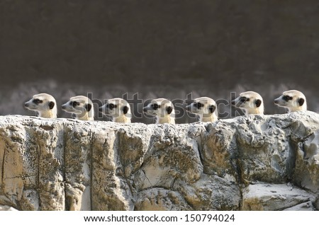 meerkets - stock photo