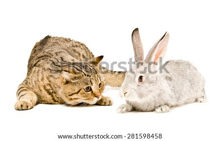 Meeting cat and rabbit isolated on a white background - stock photo