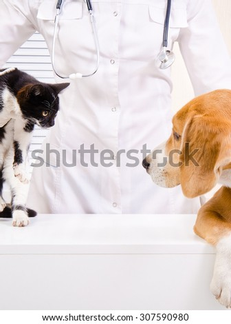 Meeting of dog with a kitten at the vet - stock photo