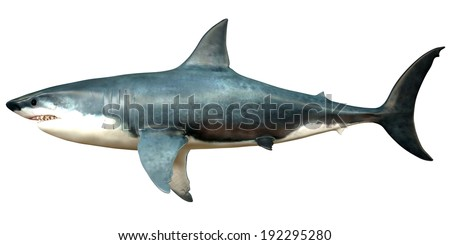 Megalodon Side Profile - Megalodon is an extinct species of shark that grew to 18 meters or 59ft and lived in the Cenozoic Era. - stock photo