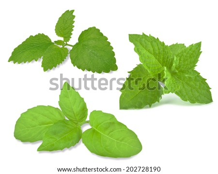 melissa, mint and basil on a white background  - stock photo