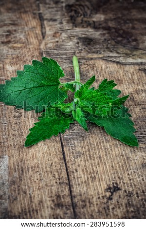 Melissa officinalis herb on wooden table top.Selective focus - stock photo