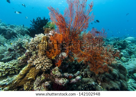Melithaeidae is a family of corals in the suborder Scleraxonia. Members of the family are commonly known as sea fans