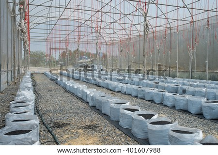 Melon in greenhouse on field agriculture - stock photo