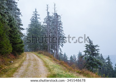 Melting snow on fir trees, mountain road, natural winter background - stock photo