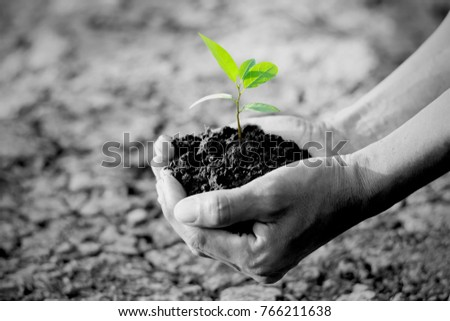 Men hands are planting the seedlings into the arid soil, global warming concepts, black and white tone.
