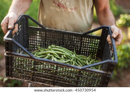 men holding a green beans harvest