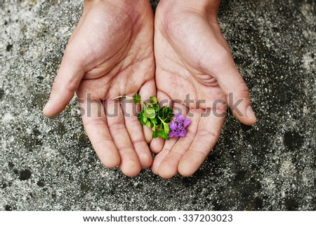 Men's palm with a flower. Human hands and plants. Caring for the environment, ecology and nature.