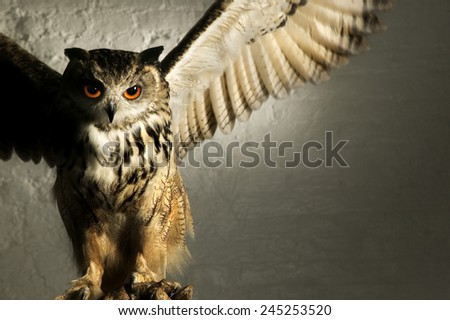 MENACING EAGLE OWL.  A well lit studio shot of an eagle owl looking menacing with wings splayed - stock photo