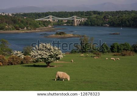 Menai Bridge in spring with hawthorn blossoming - stock photo