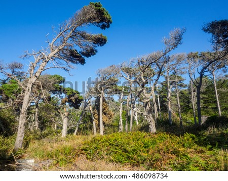 Pacific Coast Maple Stock Photos Royalty Free Images Vectors Shutterstock