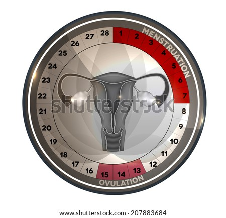 Menstrual cycle calendar, days of menstruation and ovulation. Female reproductive system anatomy at the middle, uterus and ovaries. - stock photo