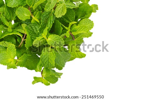 Mentha cordifolia Opiz known as Mint, isolate on white background and clipping path - stock photo