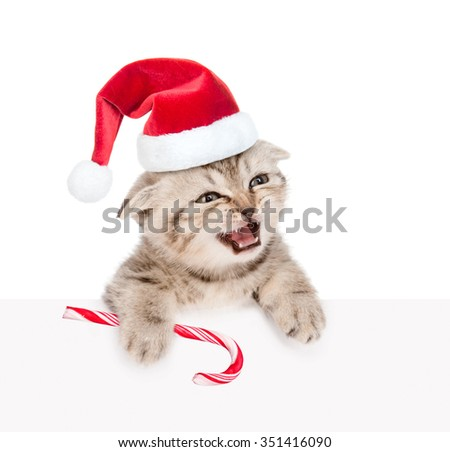 Meowing kitten in red santa hat  with Christmas candy cane looking out because of the poster. isolated on white background. - stock photo