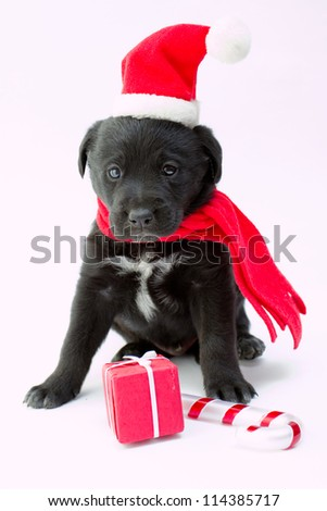 Merry Christmas - portrait of cute  puppy with Christmas gift
