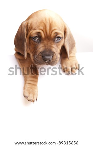 Message from dogs - stock photo