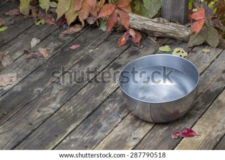 metal water bowl for a dog on wooden deck with vine foliage - stock photo