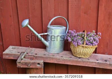 Metal watering can and wicker basket with oregano placed on bench by the red wooden wall - stock photo
