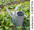 metal watering can in the field - stock photo