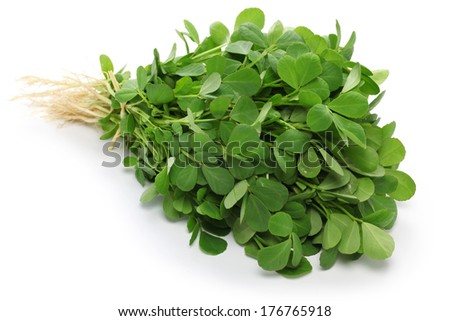 methi, fenugreek leaves - stock photo