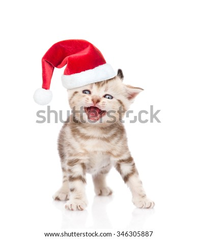 Mewing kitten in red christmas hat. isolated on white background.
