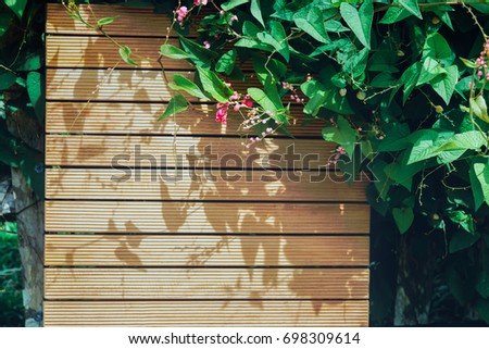 Mexican Creeper pink flower on wooden background