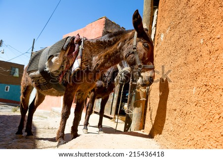 Mexican donkey with makeshift saddle in rural town - stock photo