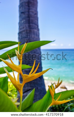 Mexican Gold Heliconia on the Beach 2 - stock photo