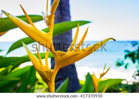 Mexican Gold Heliconia on the Beach 1 - stock photo