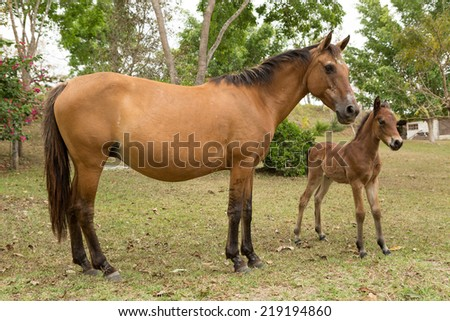 Mexican mare and foal outdoors - stock photo