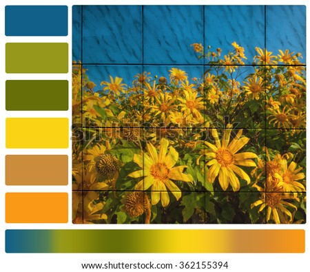 mexican sunflower with color palette swatches