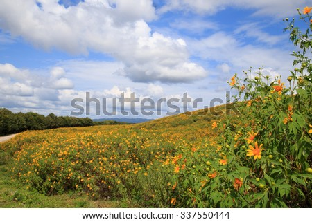 Mexican tournesol flower with cloudy sky background
