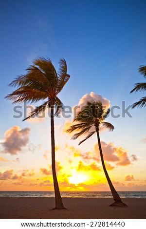Miami Beach, Florida colorful summer sunrise or sunset with palm trees, beautiful sky and ocean  - stock photo