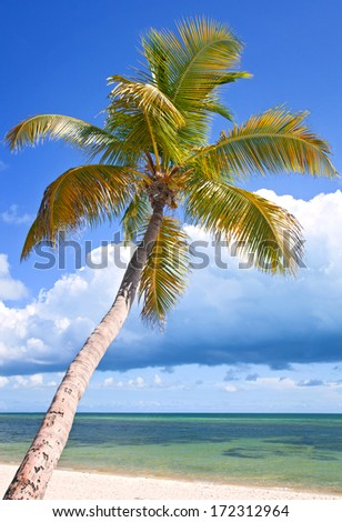 Miami Florida, beautiful summer beach landscape with ocean and palm trees
