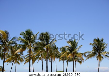 Miami palm trees on a blue sky - stock photo