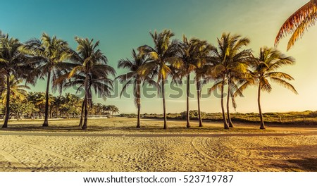 Miami South Beach park with palms, Florida. Vintage colors